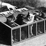 Katzenklavier (Cat Organ)