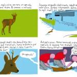 Non sono un capriolo – I'm not a deer, by Giacomo Nanni