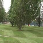 Arbores Latae, Diller Scofidio + Renfro